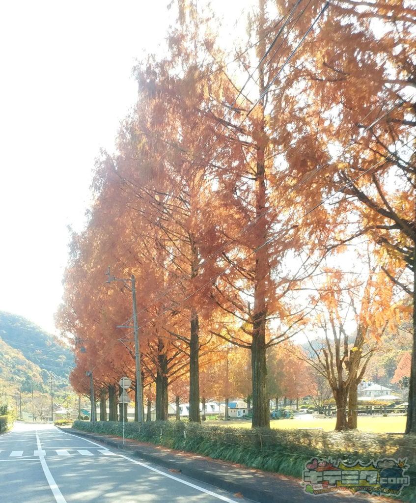 岐阜畜産センターの秋模様