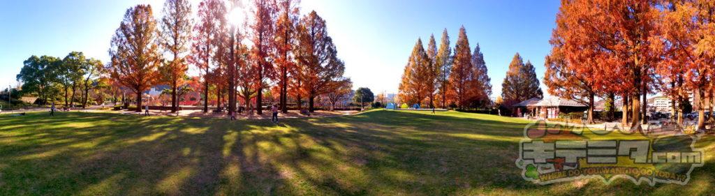 美しい長良公園
