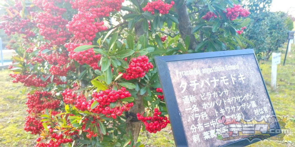 グリーンピア春日井の生け垣がキレイ